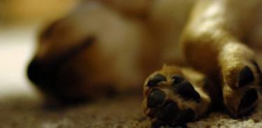 Envenenaron a dos perros para robar casa en MH