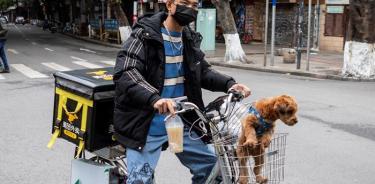 Ponen en cuarentena a perro que dio positivo a coronavirus