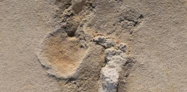 Se encontraron 50 huellas prehumanas en Creta.